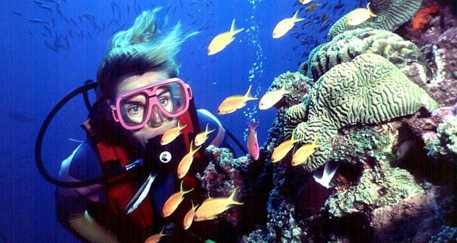 UNESCO urges Australia to take action to protect reefs