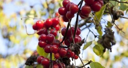 Taste safari: Flavor hunt at the foothills of Mount Erciyes