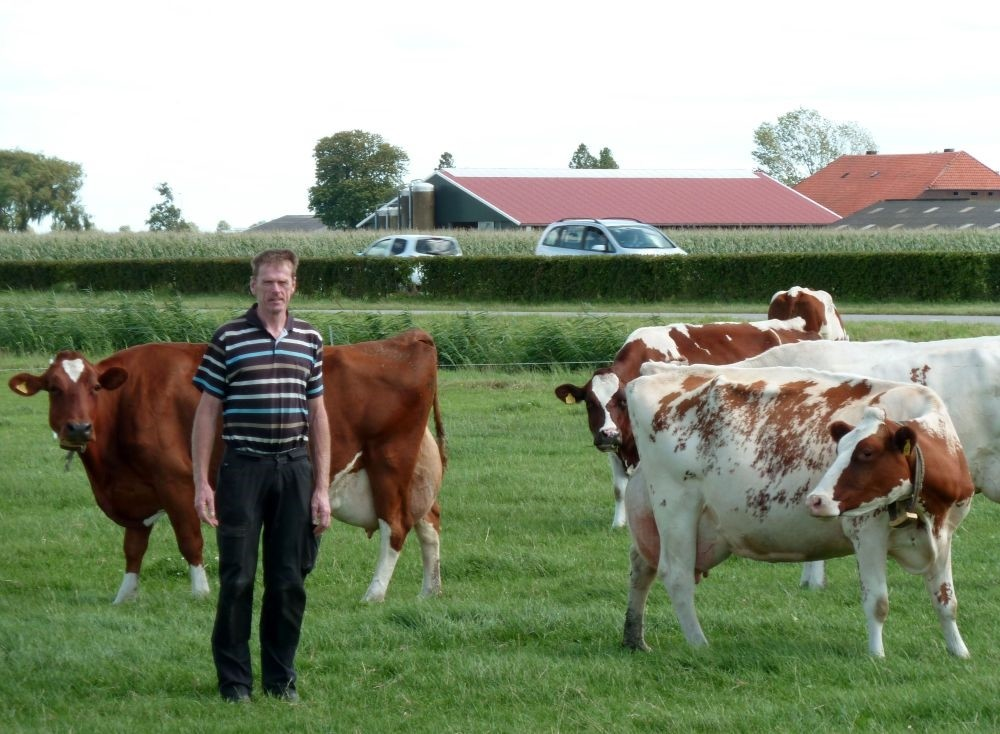 Livestock farmer and milk producer Gerard Hartveld, 52, poses next to his Red Holstein cows in his farm on Nieuwveen.
