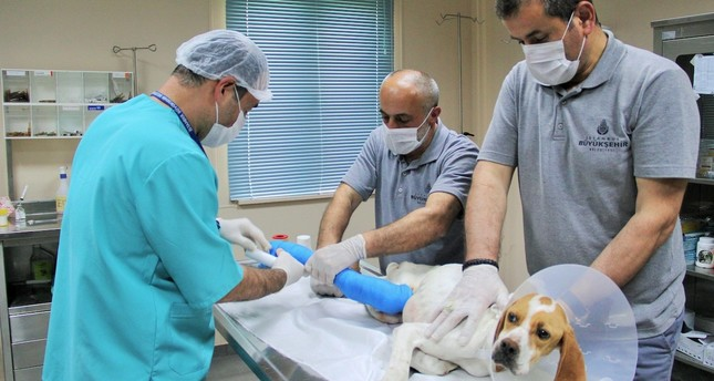Alongside the six veterinary hospitals across the city, mobile veterinary vehicles such as Vetbüs and Vetkabin are also available to address the needs of the stray animals of Istanbul.