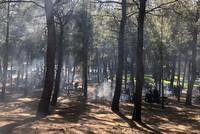 ولاية إسطنبول تقرر حظر دخول الغابات طيلة شهر أغسطس