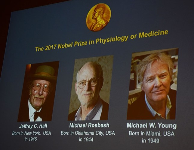 Winners of the 2017 Nobel Prize in Physiology or Medicine (L-R) Jeffrey C. Hall, Michael Rosbash and Michael W. Young are pictured on a display during a press conference at the Karolinska Institute in Stockholm on October 2, 2017. (AFP Photo)
