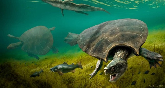 The huge extinct freshwater turtle Stupendemys geographicus, that lived in lakes and rivers in northern South America during the Miocene Epoch, is seen in an illustration released Feb. 12, 2020. Handout via Reuters