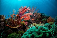 Plummeting ocean oxygen levels threaten marine life