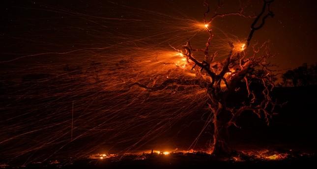 High winds fuel hot embers from a burning oak tree near Windsor, California, October 29, 2019.  (EPA Photo)