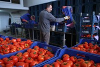 Russia to import Turkish tomatoes in certain periods