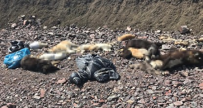 Dozens of strays found killed in capital Ankara, angering locals, activists