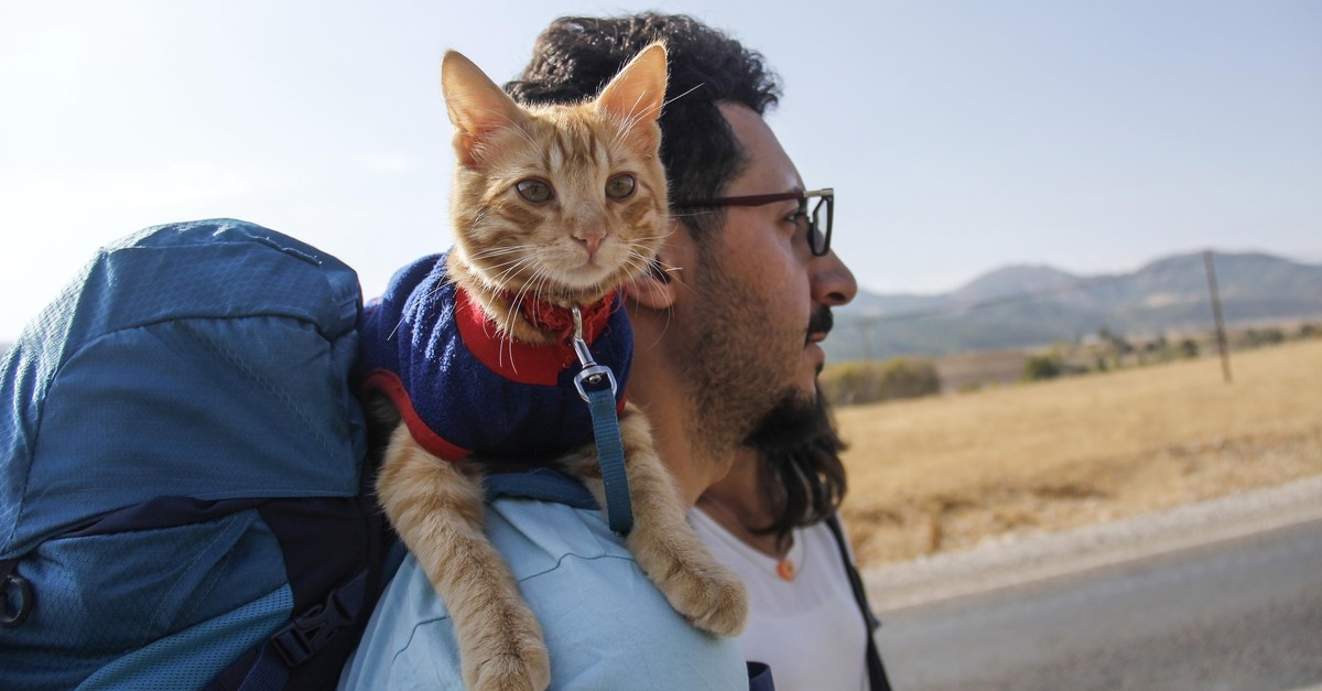Azman travels around Anatolian towns with its owners in their backpacks. (AA)