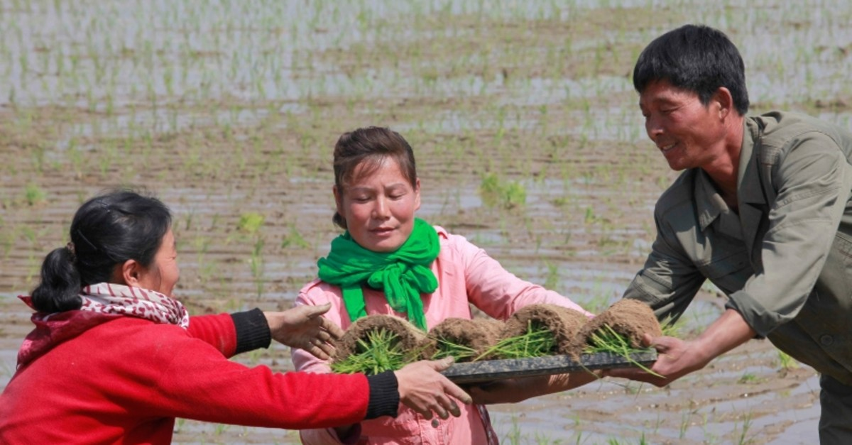 In this May 12, 2019, photo, farmers replant rice seedlings in a field in Chongsan-ri, North Korea (AP Photo)