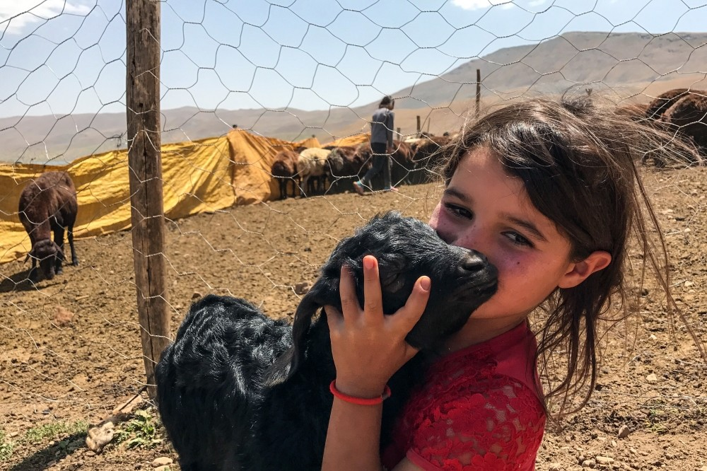 A Yu00f6ru00fck child hugs one of the cattle her family feeds in the highlands of Eastern Anatolia.