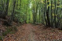 منظر ساحر في منتزه بولونيزكوي Shutterstock