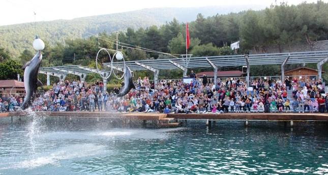 Defenders claim captive dolphins help Turkish tourism