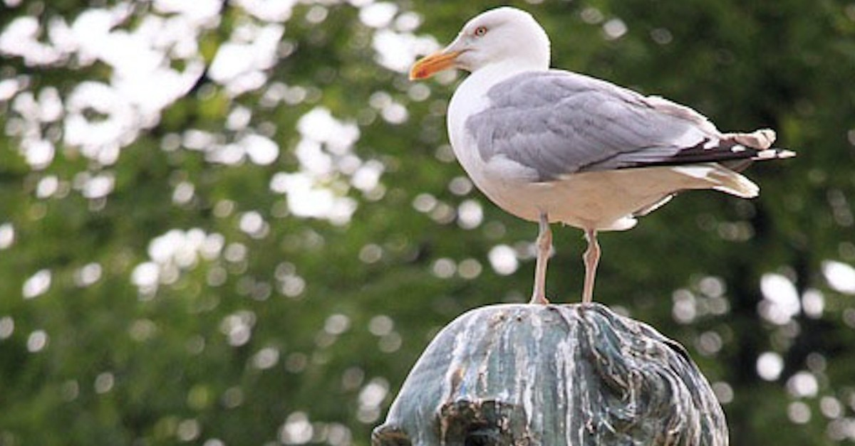If a bird defecates on your head, it is believed that you are on a roll.