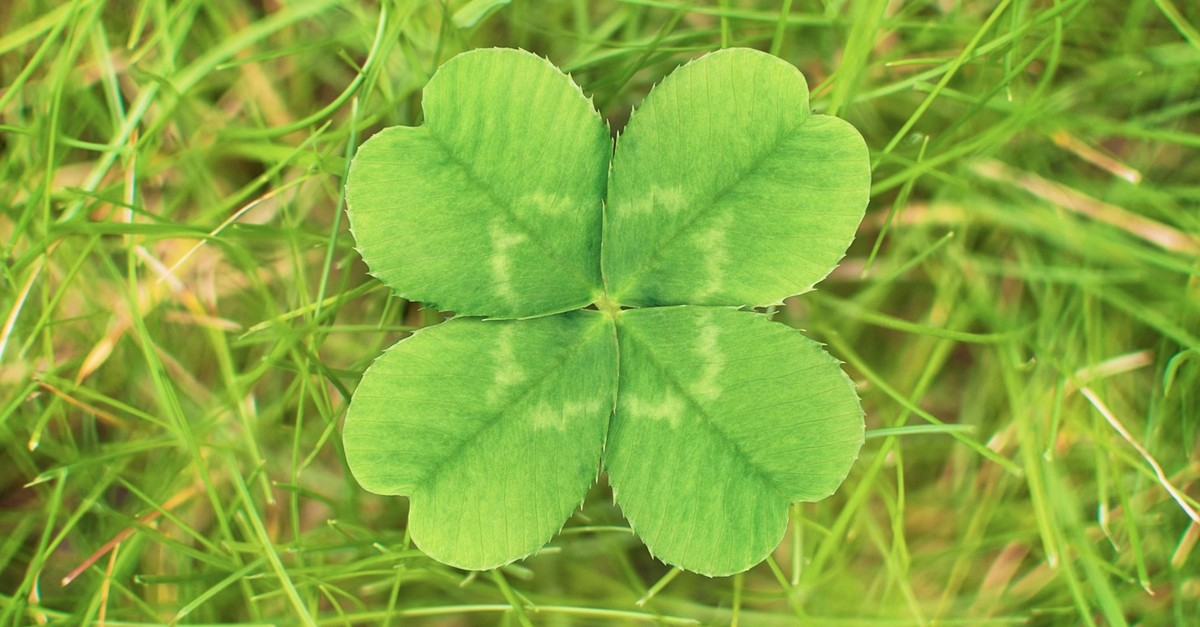 The four leaves represent hope, faith, love and most importantly luck.