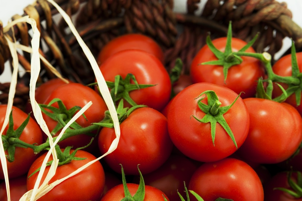The value of tomato exports to Russia was $365.3 million in 2015, while it reached around $198.3 million during the January-July period of this year from last year's $159 million.