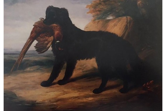 William Barraud, ,Black Retriever with a Pheasant,, 1839.