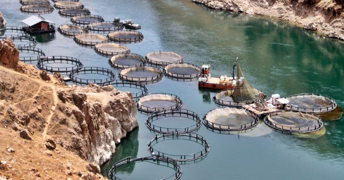 A cage fish farm in the Keban district of the eastern province of Elazu0131u011f. (AA Photo)