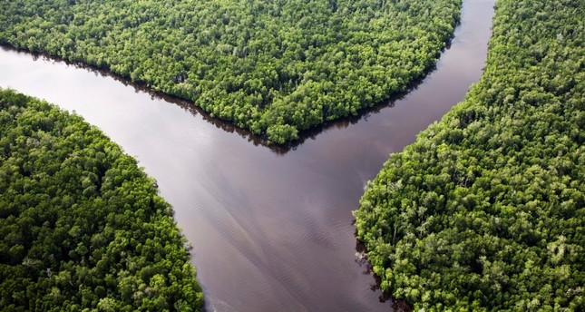 A handout picture released by Greenpeace on 21 March 2012 and taken on 28 February 2012 shows untouched forest in the Sungai Sembilang National Conservation Park in South Sumatra, Indonesia. EPA Photo