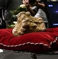 850-gram white truffle sells for 85,000 euros in Italy