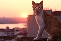 Nine Lives documentary on Istanbul cats already huge hit in US