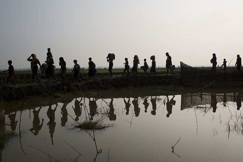 Members of Myanmar's Rohingya ethnic minority walk through rice fields after crossing the border into Bangladesh. (AP Photo)