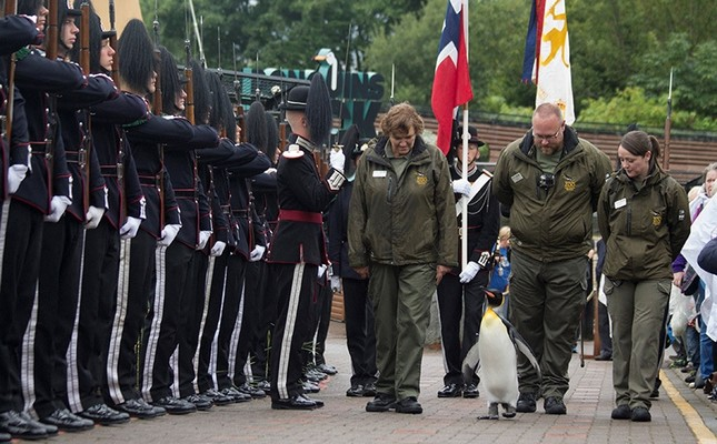 Sir Nils Olav, Norway's latest brigadier general, inspects royal guards