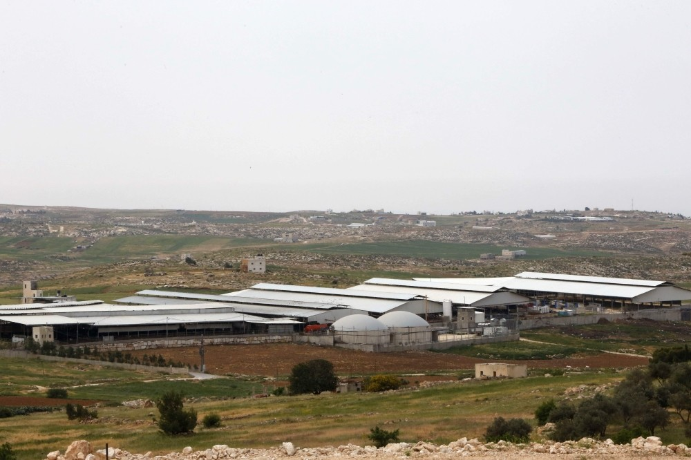 Cows feed off hay at the Jebrini dairy farm in the West Bank town of Hebron, where cow dung is used to produce electricity as an alternative power source.
