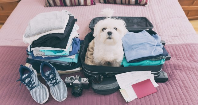 Traversing with the furry member of the family: Tips for traveling with your pet