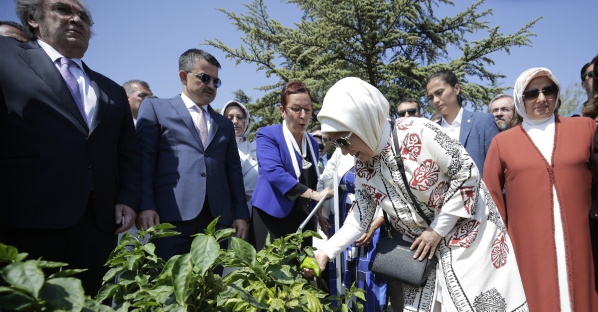 First lady Emine Erdou011fan examined plants grown at a Ministry of Agriculture Center where seeds are preserved in Ankara, Sept. 4, 2019.