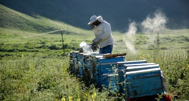 A bee keeper in the Faraşin Plataeu collects honey.