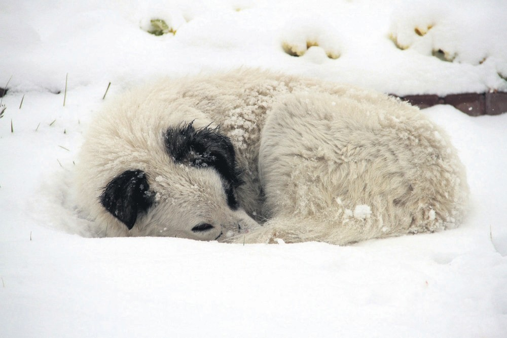 A stray dog tries to keep himself warm after a snowstorm.