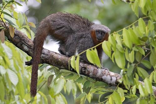 Amazon rainforest reptiles