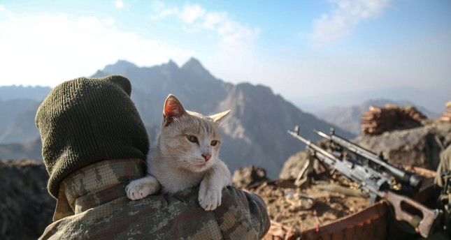 Cats discovered in terror hotbed bond with soldiers