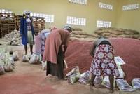 الفاصولياء الفائقة تزيد من آمال مواجهة الجوع في إفريقيا