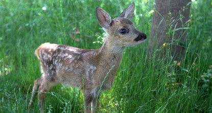 WWF Turkey launches wildlife emergency hotline