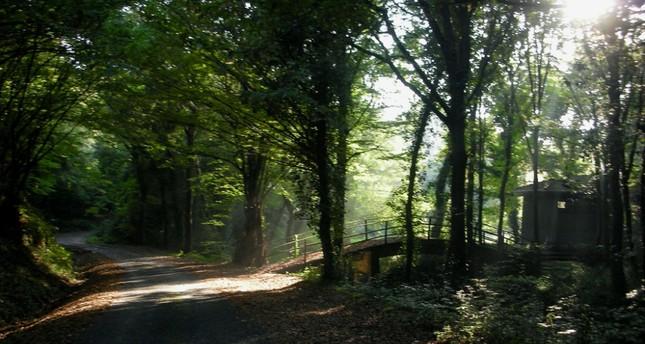 Belgrade Forest's Deer Run race this Sunday