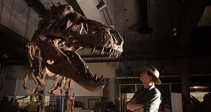 World's biggest T. rex skeleton identified in Canada