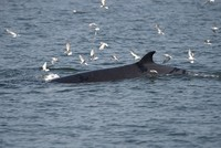 A whale recently killed off western Norway was found to have 30 plastic bags and other plastic waste in its stomach, highlighting the waste issue, researchers said Thursday.  The grisly discovery...