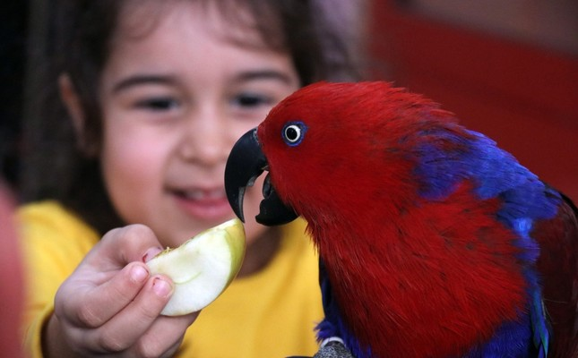 A student feeds a parrot that has become the mascot of the school.
