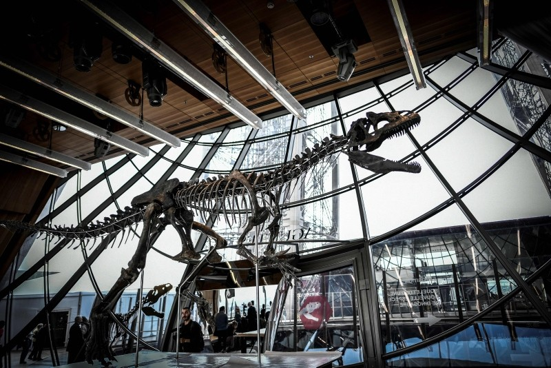 A picture taken on June 2, 2018 shows a skeleton of an undeterminate carnivorous dinosaur on display at the first floor of the Eiffel Tower in Paris (AFP Photo)
