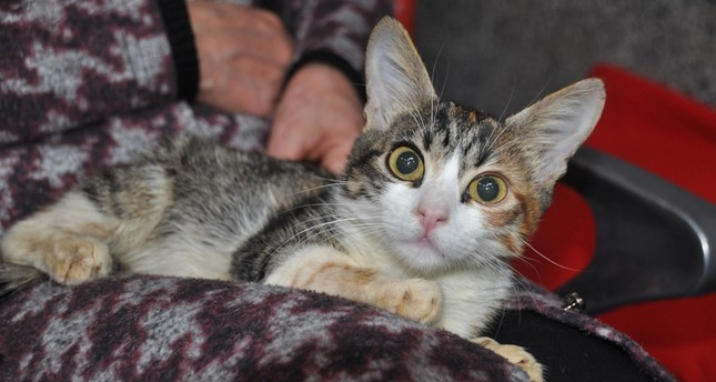 Strays in Istanbul get microchips to monitor their health