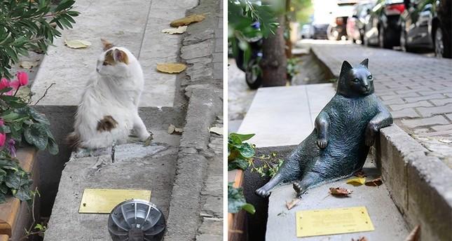 سرقة تمثال قطة إسطنبول الشهيرة تومبيلي