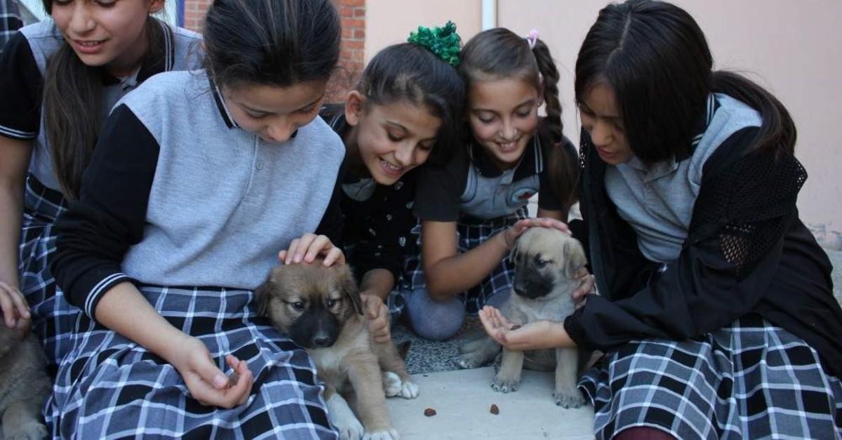 Middle school students pet stray dogs, Amasya, Oct. 21, 2019 (AA Photo)
