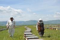 العسل التركي.. ارتفاع في الصادرات وتطلع لفتح أسواق جديدة
