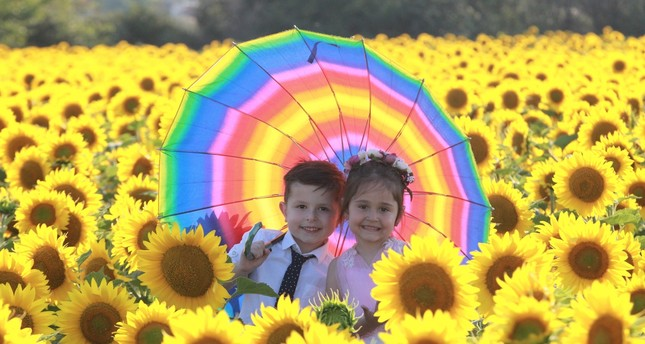 Sunflower fields in Thrace become open-air photo studios