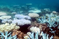 'Catastrophic' coral damage discovered on Australia's Great Barrier Reef