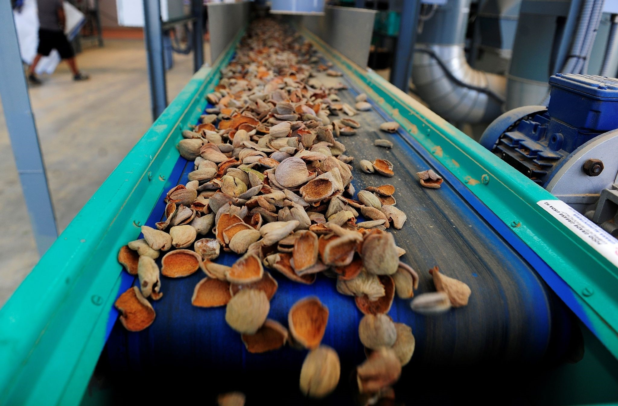 Almond shells are transported on a conveyor belt in an almond processing factory in Cordoba.