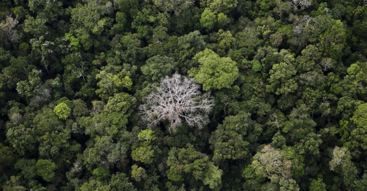 An aerial view shows the Amazon rainforest at the Bom Futuro National Forest near Rio Pardo in Porto Velho, Rondonia State, Brazil, September 3, 2015. (REUTERS Photo)