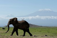 Elephant genome study highlights crossover and distinctions in family tree