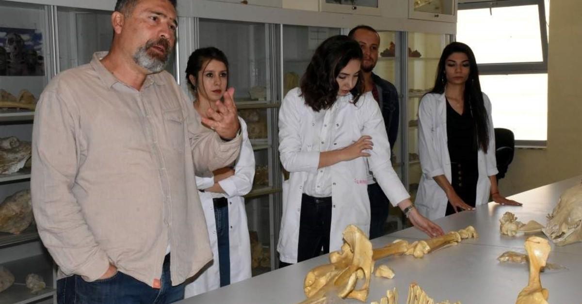 Turkish and foreign experts study the bones found in Ku0131ru015fehir's Kurutlu village. (AA Photo)
